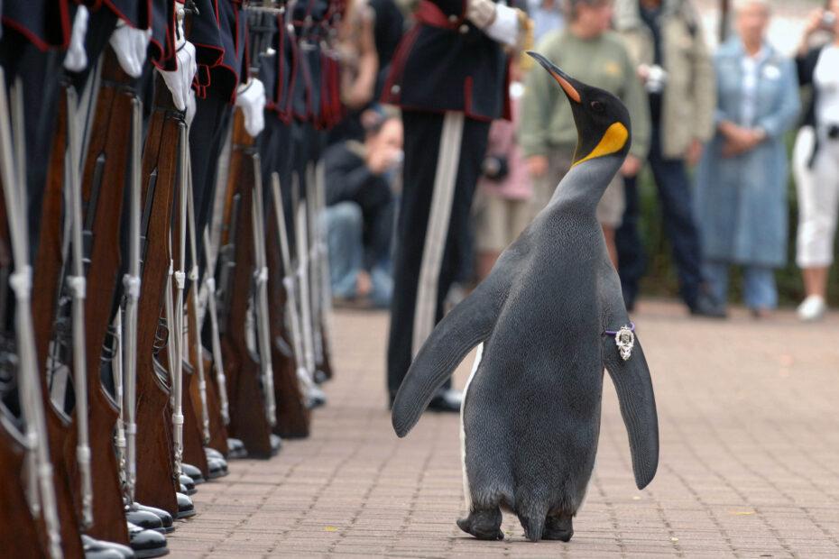 Sir Nils Olav inspiziert im August 2008 die norwegische Königsgarde.