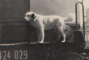 Der reisende Hund Lampo auf einem Zug.