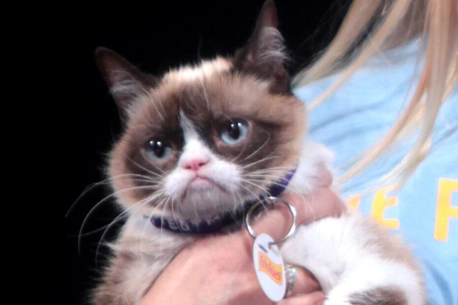 Grumpy Cat auf der VidCon 2014 in Kalifornien.